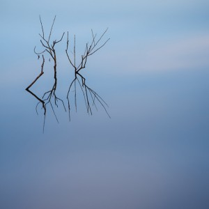 Partially submerged tree and reflection - 34pts