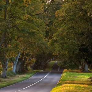 Undulating road - Editor's choice 15 January 2011