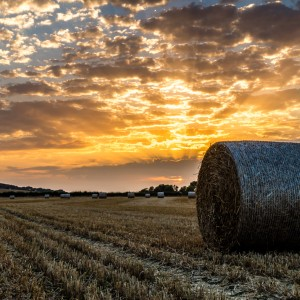 Sunset at Harvestime-#appicoftheweek