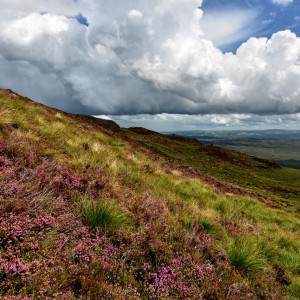 Clouds and heather