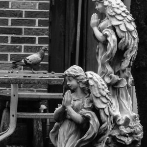 Pigeon meets the angels