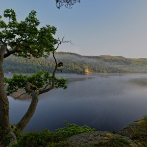 A lone tree above Ullswater