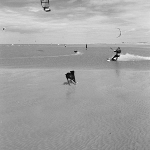 Kite surffer and dog.