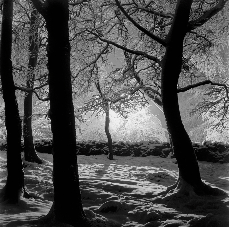 Photo Insight with Andrew Sanderson – Edge of the Woods