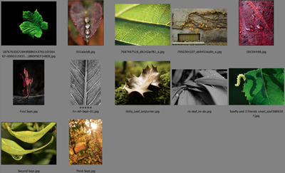 Amateur Photographer forum competition results for the September 2012 round. The theme was 'Leaf.'