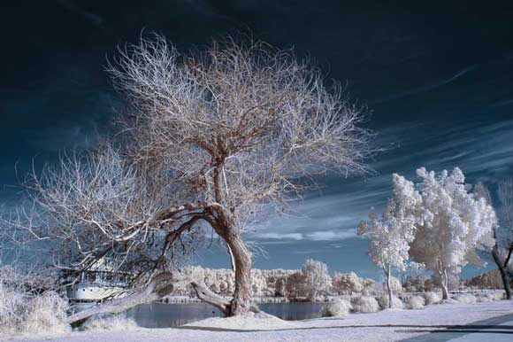 How to Shoot Infrared Photography