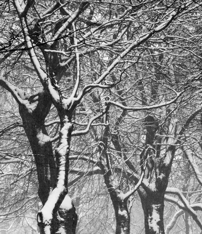 Photographing frost and Snow