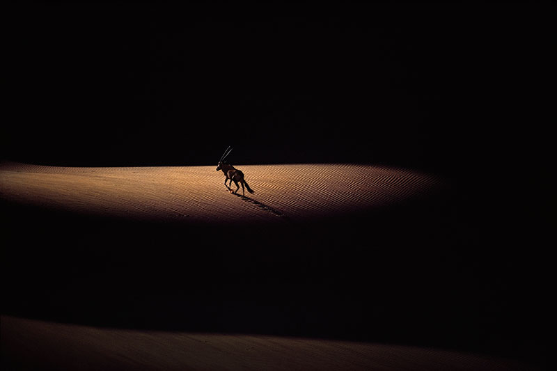 Photo Insight with Jim Brandenburg – Oryx in deserts of Namibia