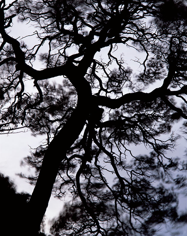 Photo Insight with David Ward – Scots Pine