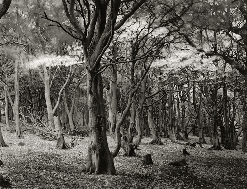 Photo Insight with Andrew Sanderson – Windy Woods
