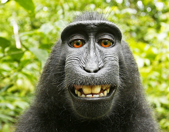 Interview: Photographer 'confident' after monkey selfie ruling (update 4.50pm)