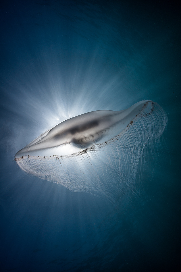 Nick_Blake_ Irish_Jellyfish_sunburst.web