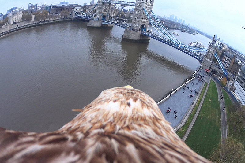Eagle POV Video Captures View of London's Skyline