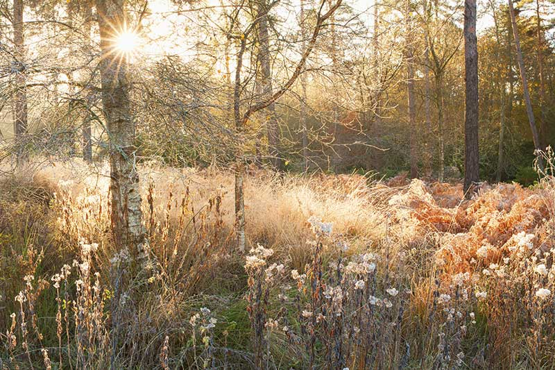 How to photograph Wareham Forest in Dorset: top tips and best locations