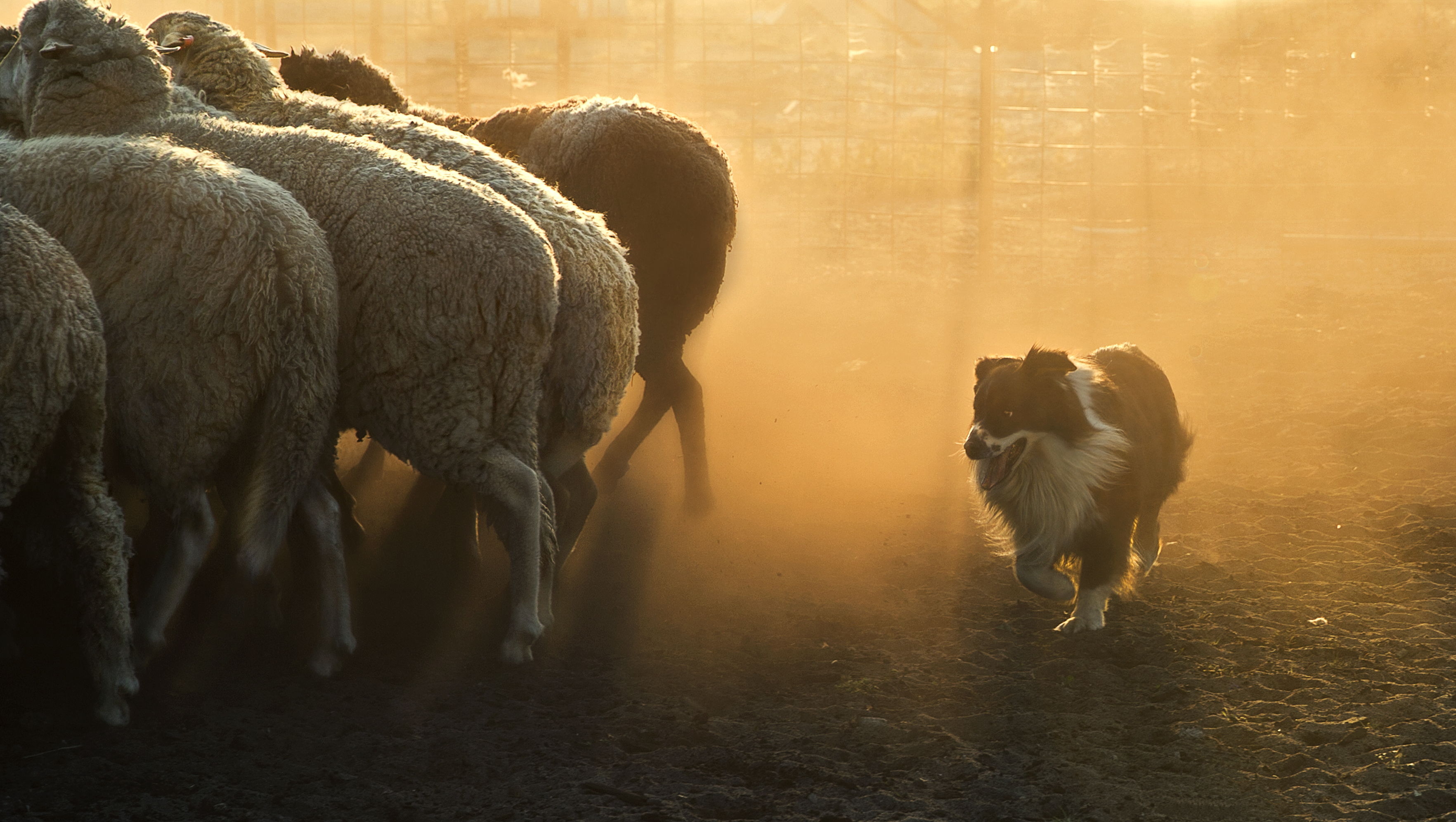Amateur triumphs as Dog Photographer of the Year revealed