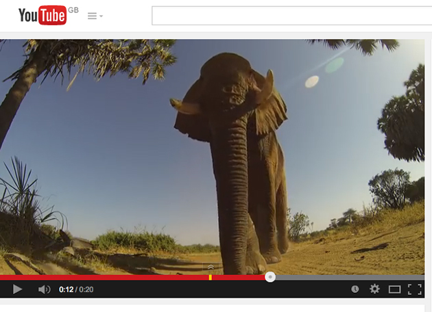Video: Photographer's GoPro camera survives elephant attack