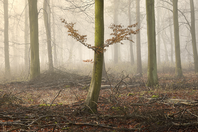 Essential guide to woodland photography
