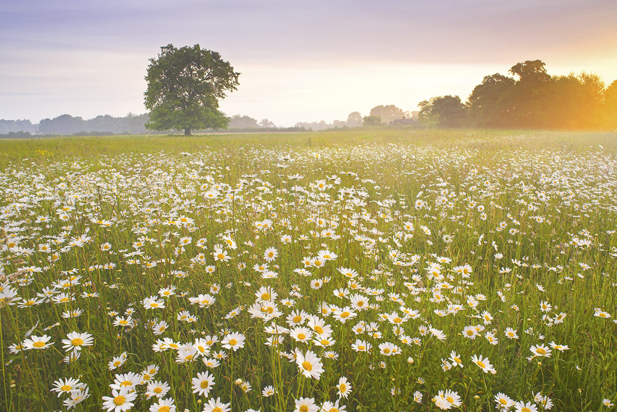 The Definitive Guide to Photographing Wildflowers