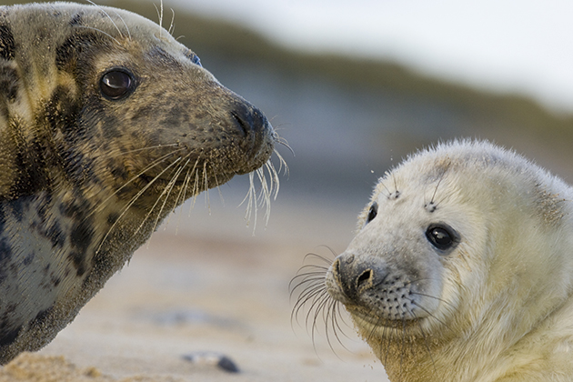 Wildlife photography: Getting the best shots of seals