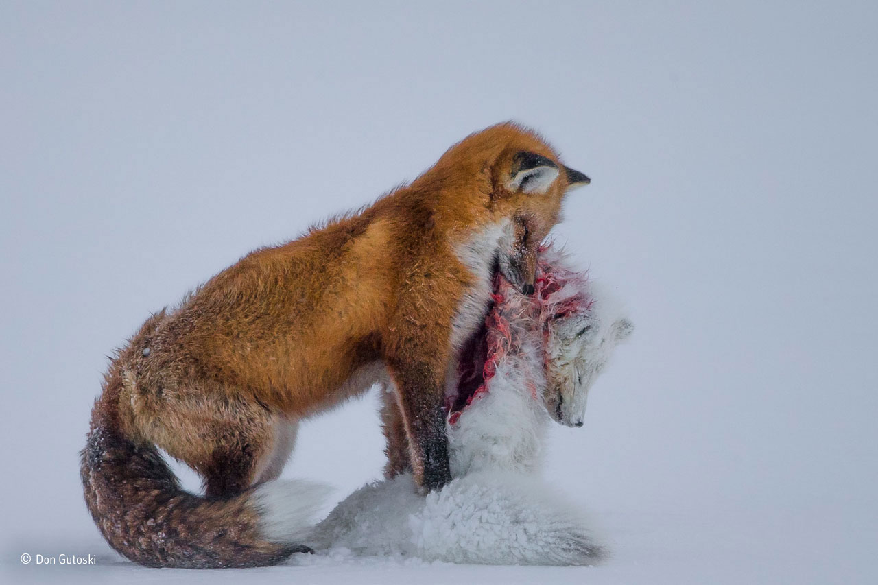 Wildlife Photographer of the Year 2015: Amateur photographer beats professionals to win title