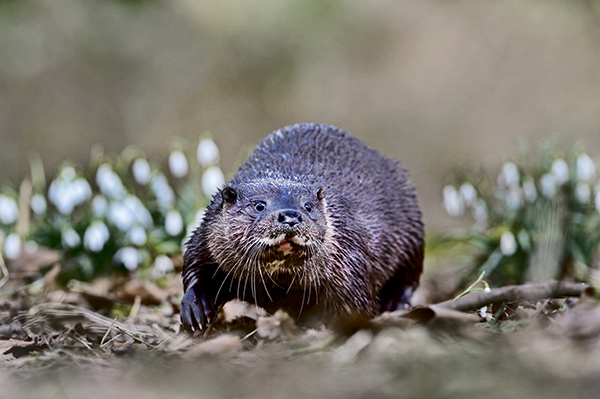 Wildlife Watch: Photographing otters