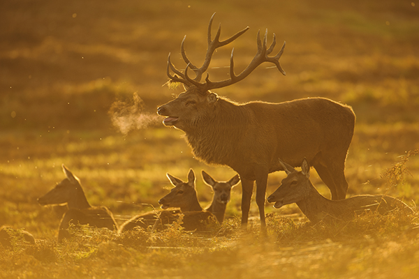 Wildlife Watch: Photographing red deer
