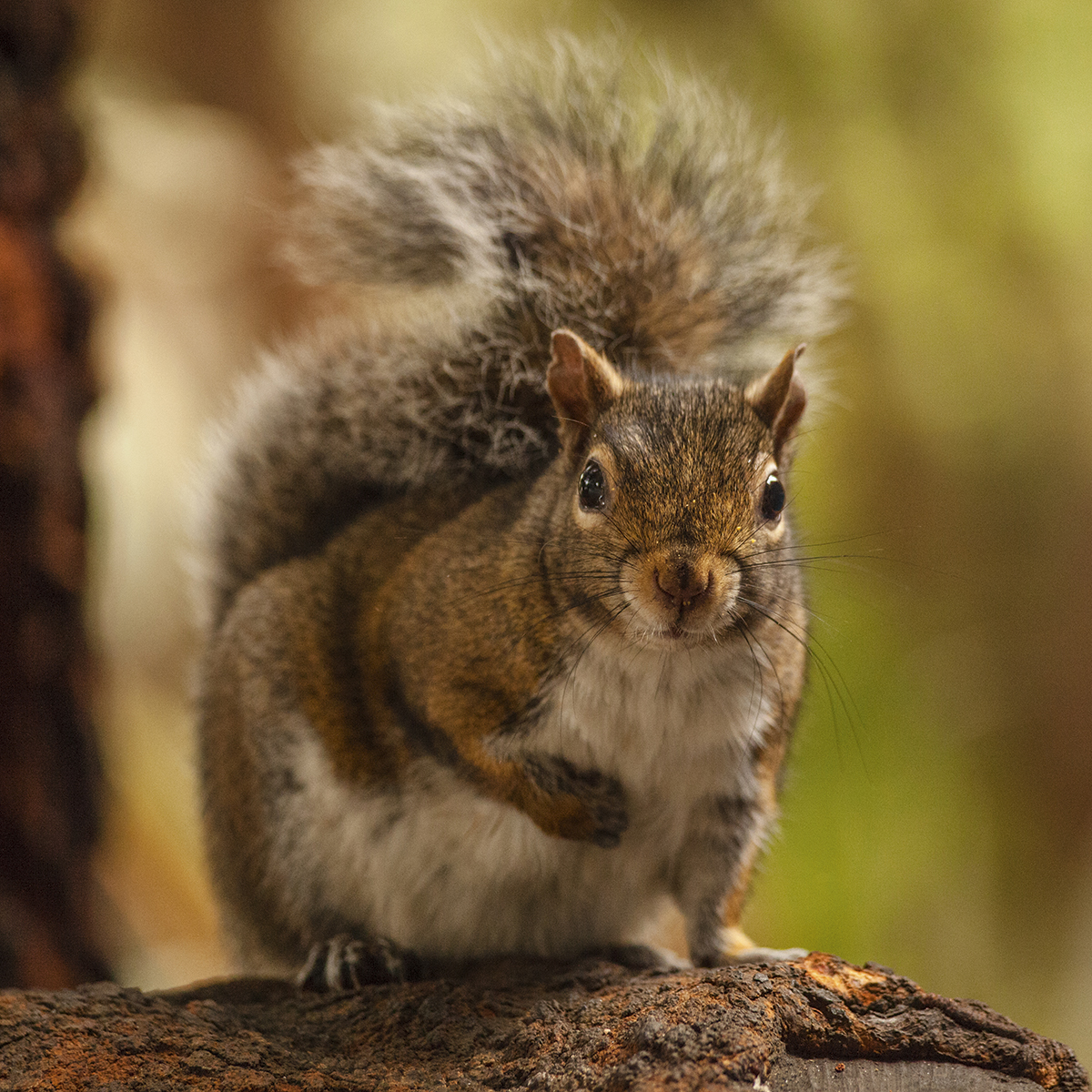 Photo appraisal: Squirrel