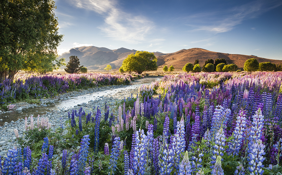 'Joy to behold': UK photographer wins International Garden Photographer of the Year with lupin landscape