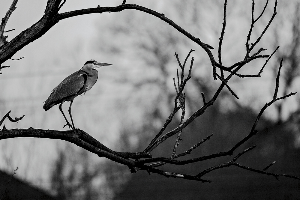 Photographing the birds of Britain