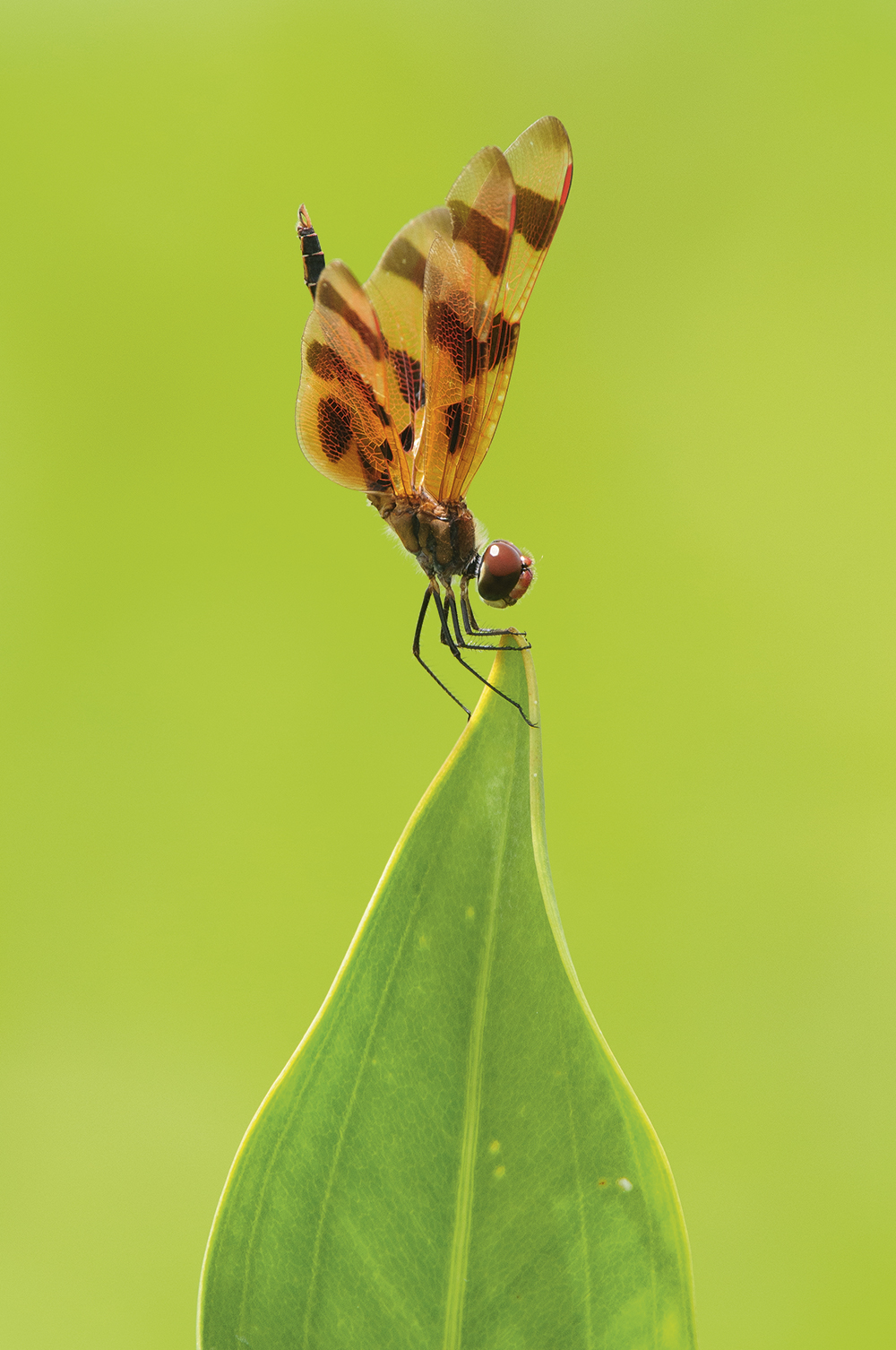 long-lens-masterclass-insects