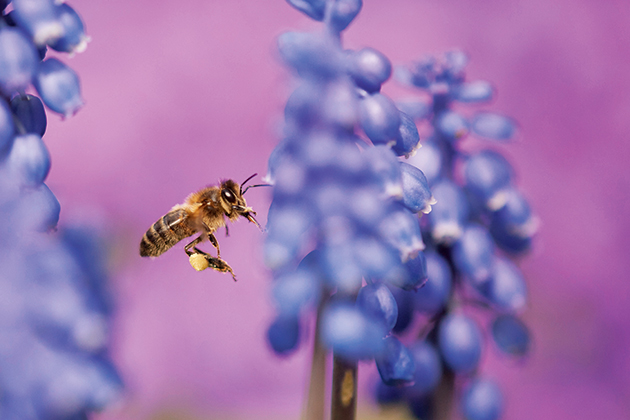 Wildlife photography: setting up the perfect haven in your garden