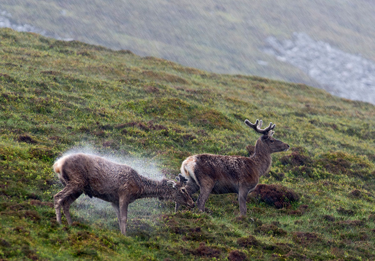 Perfect storm: Advice for wildlife photography in bad weather