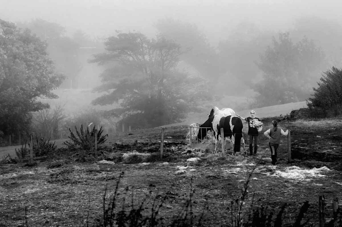 Photo appraisal: Horses in the mist