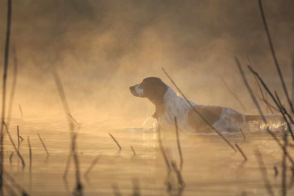 Amateur photographer triumphs at Dog Photographer of the Year
