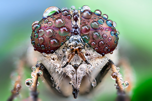 Getting close up with nature photography