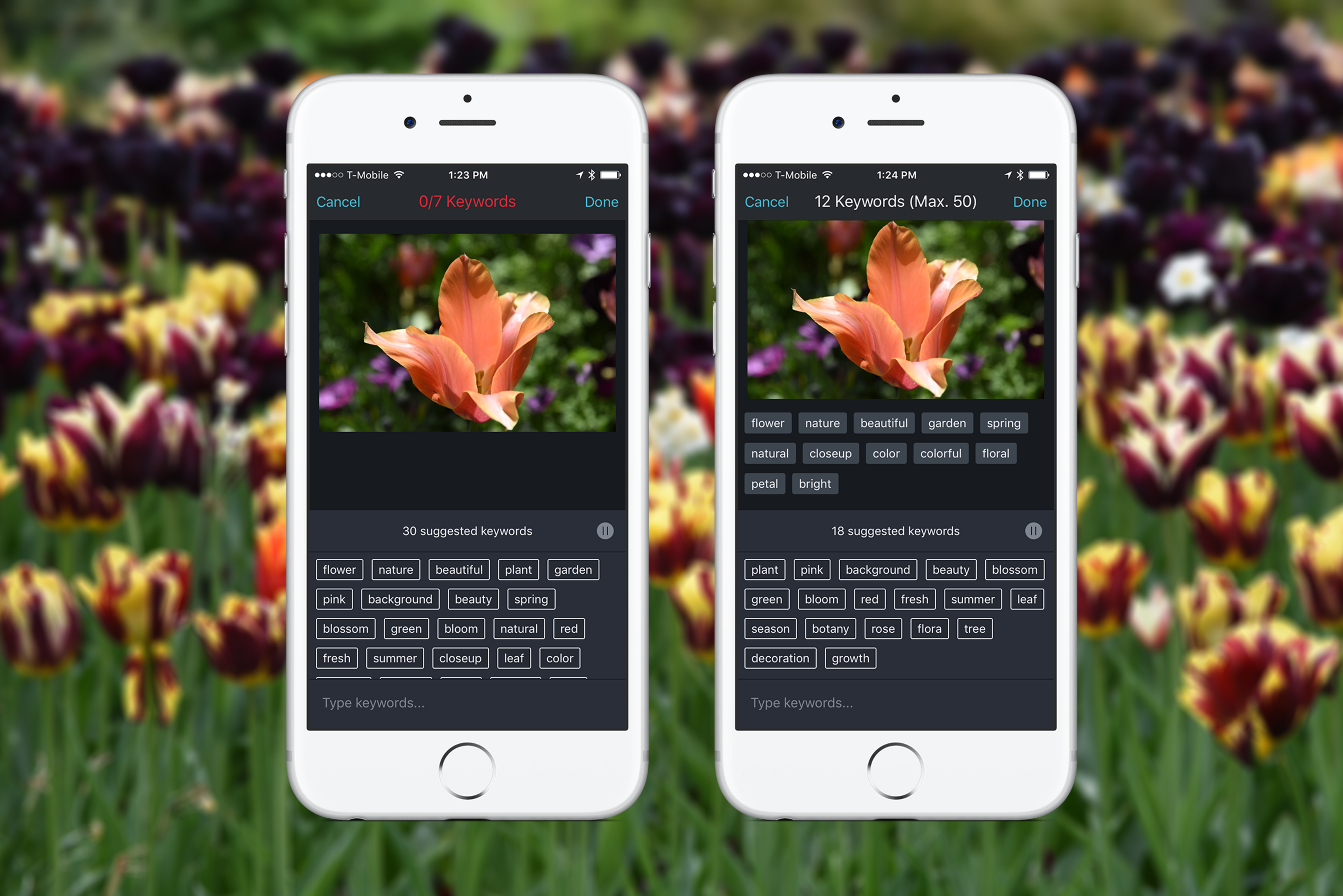 Shutterstock releases a keyword suggestion tool for iPhone that uses artificial intelligence