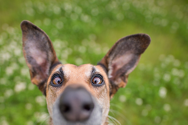 Top tips: Dog photography