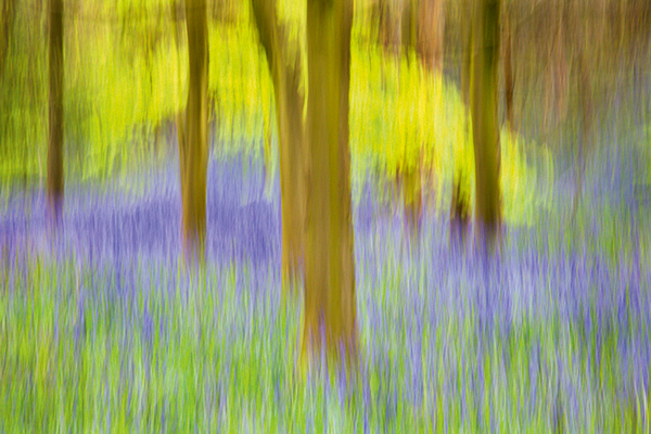The strong verticals of tree trunks make a fitting subject for fast, vertical camera movement