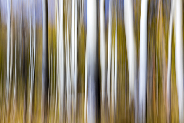 Quick tips: Intentional camera movement (ICM)