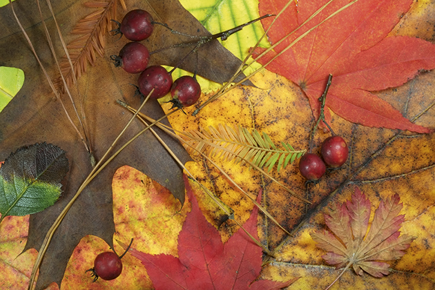 autumn macro tracy calder leaves and berries