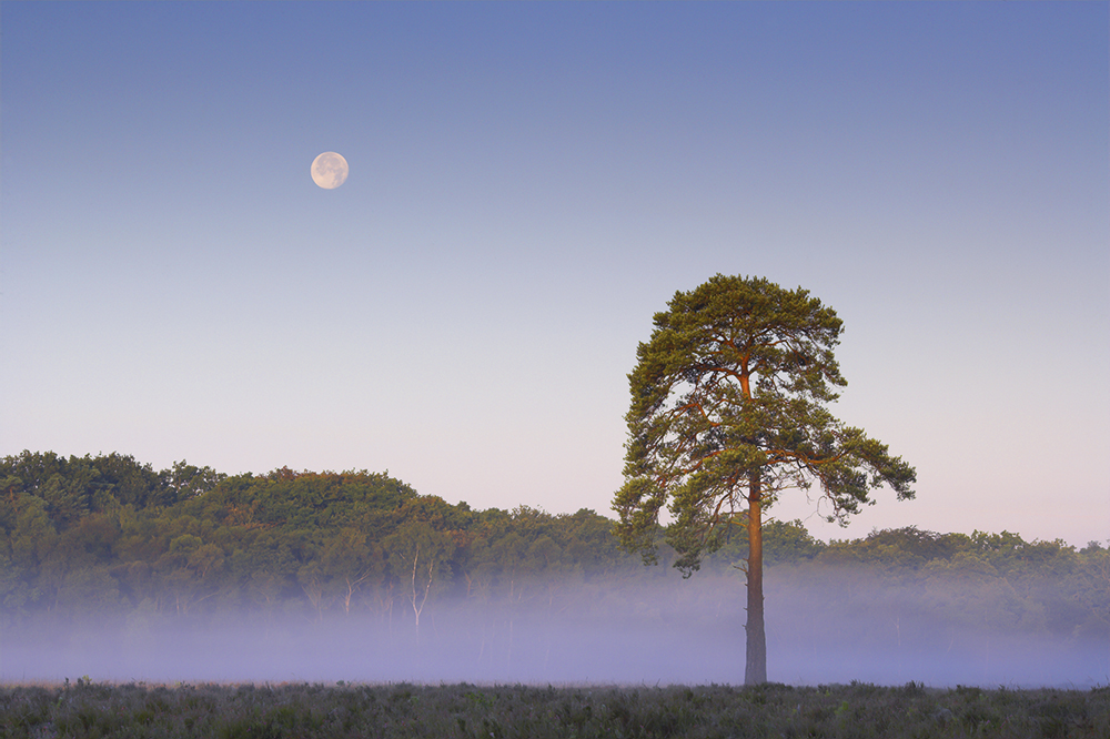 colin roberts moonset with pine