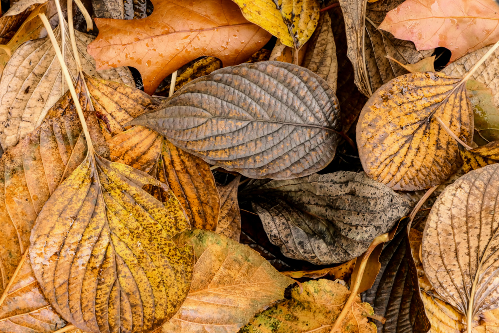 How to get the most out of photographing autumn