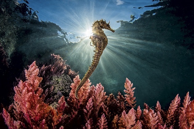 Photo Insight with Marco Gargiulo: The Seahorse