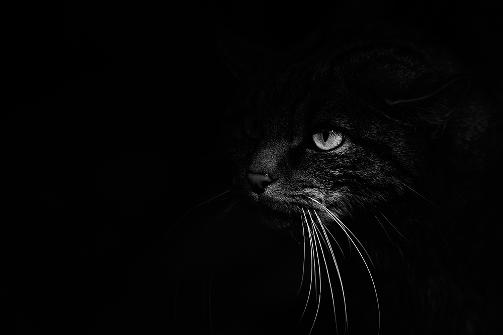 David Tipling monochrome cat