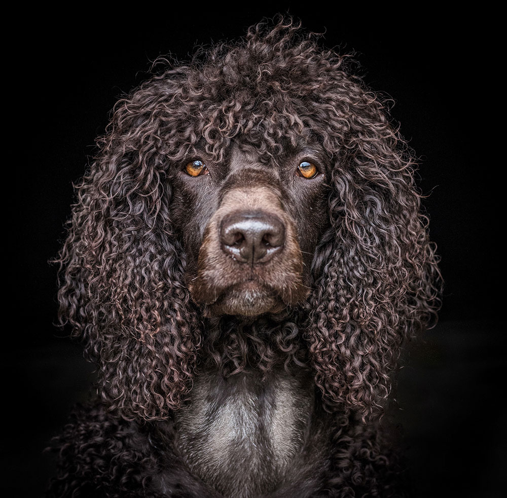 Andy Biggar dogs portraits