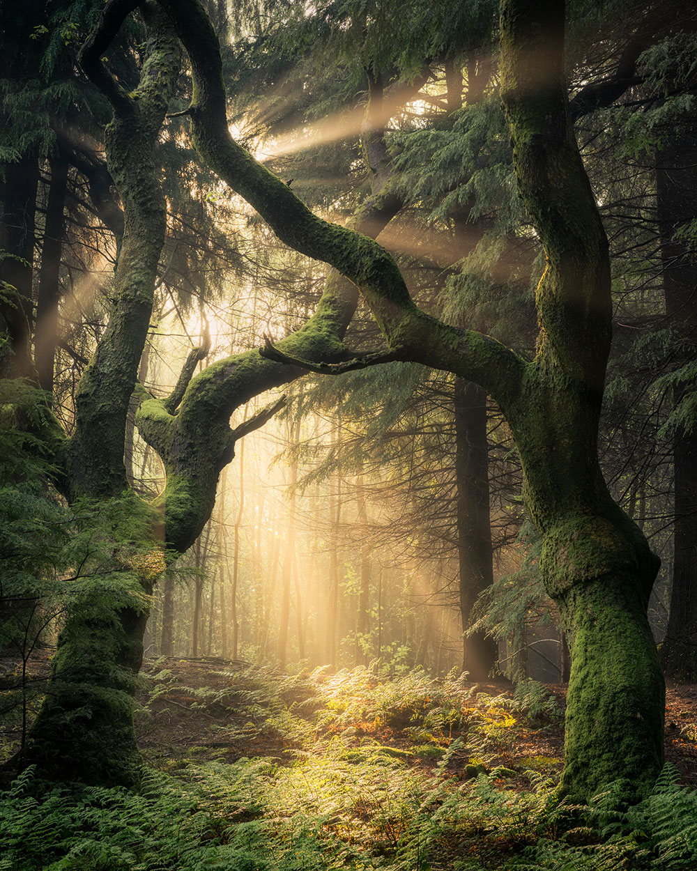 Photo Insight with Simon Baxter: Guardians of the Forest