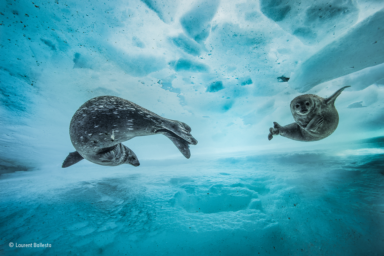 Wildlife Photographer of the Year 2017 finalists revealed