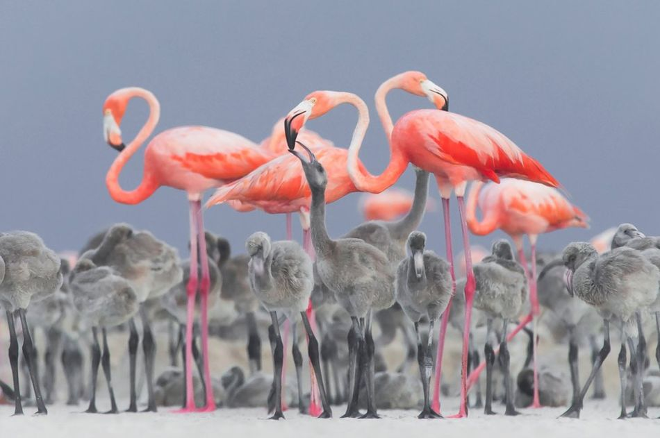 Bird Photographer of the Year – a selection of this year's stunning winners