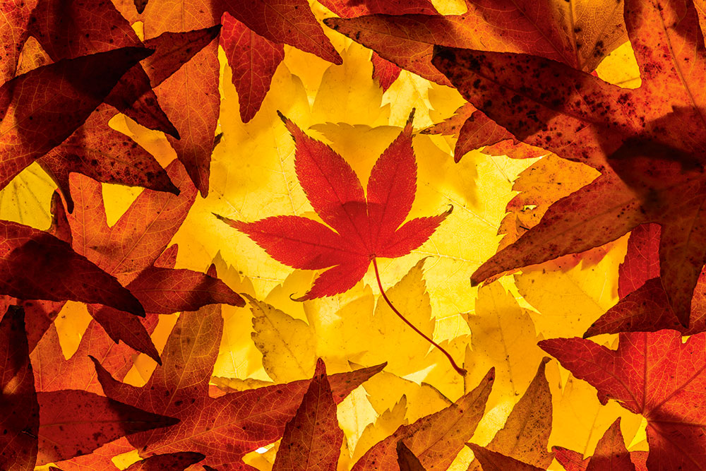 15 Tips For Photographing Autumn Leaves Amateur Photographer