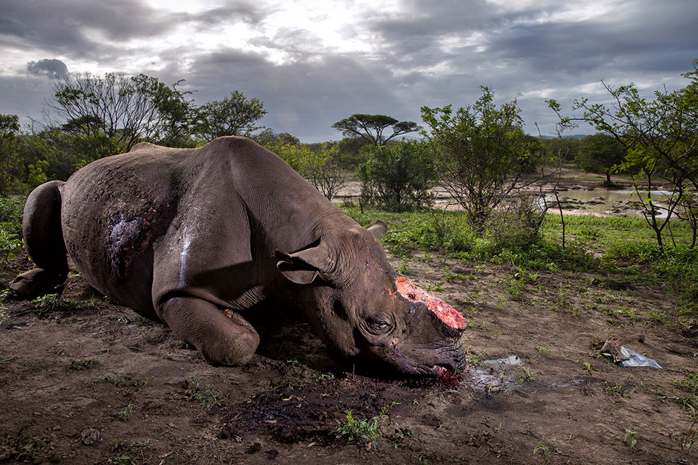 Images of 2017 Brent Stirton